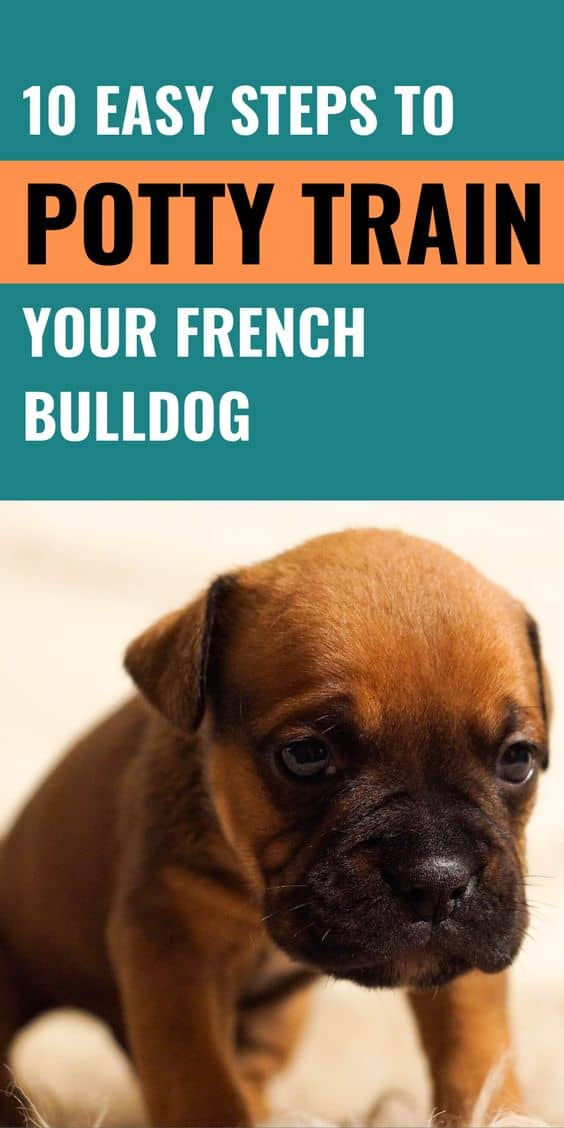 10 Easy Steps To Potty Train Your French Bulldog