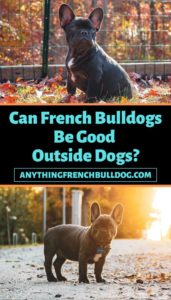 Can French Bulldogs Be Good Outside Dogs