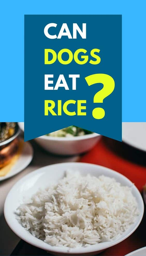 Can French Bulldogs eat Rice