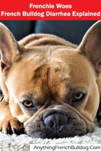 French Bulldog Diarrhea