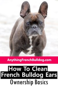 How To Clean French Bulldog Ears