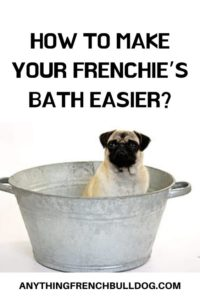 How to Give a Puppy French Bulldog A Bath