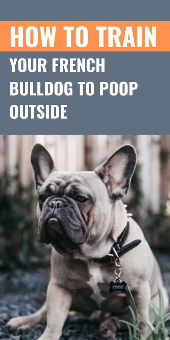 How to Train Your French Bulldog to Poop Outside