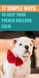 7 Simple Ways to Keep Your French Bulldog Calm