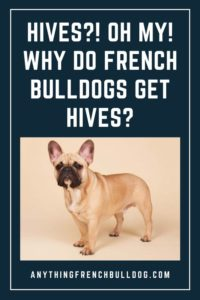 Hives?! Oh my! Why do French Bulldogs get hives