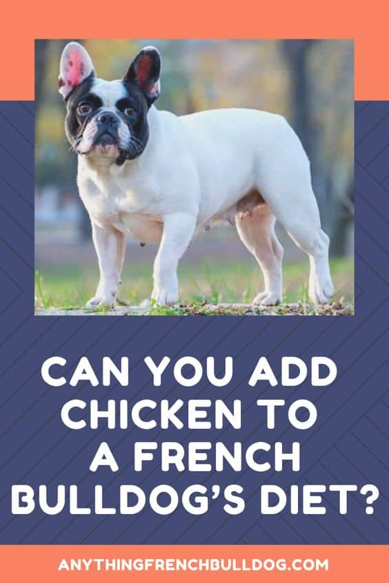 can french bulldog eat chicken